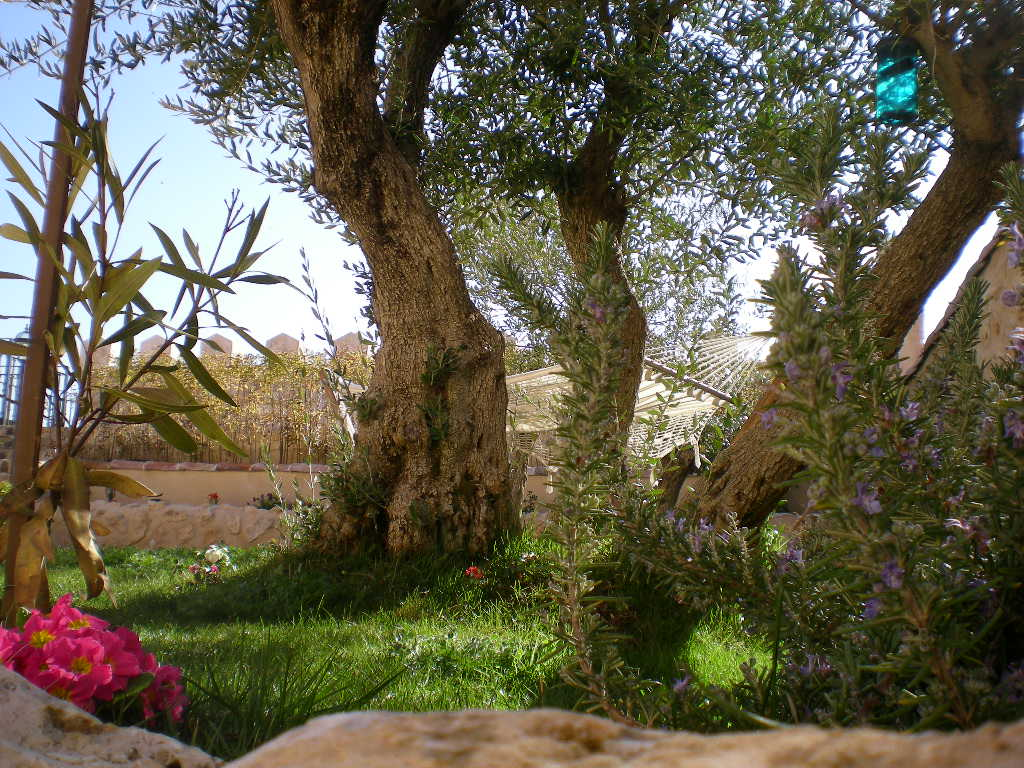 jardin 1 - Casa rural con chimenea
